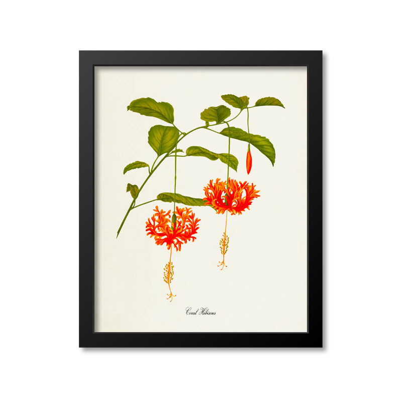 Coral Hibiscus Flower Art Print