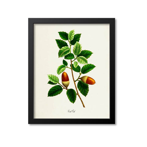 Cork Oak Art Print
