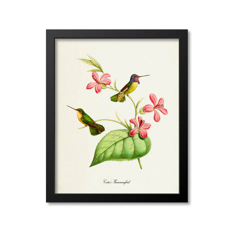 Costas Hummingbird Print
