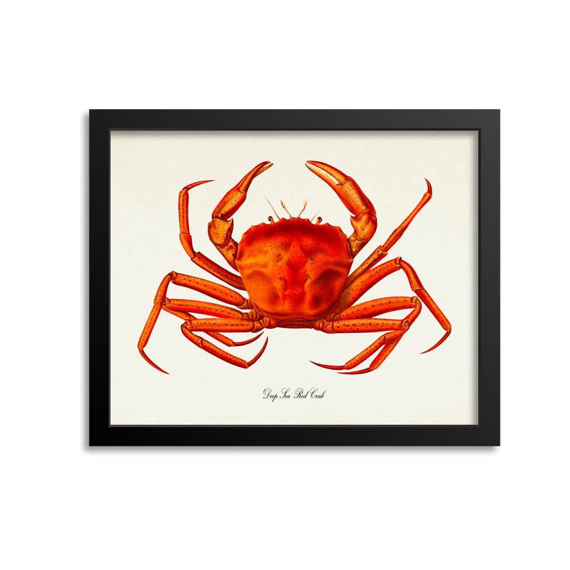 Deep Sea Red Crab Art Print