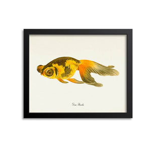 Deme Ranchu Goldfish Art Print