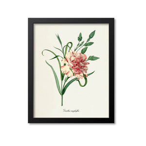 Carnation Flower Art Print 2