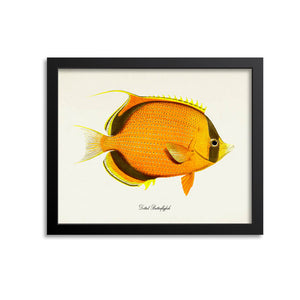 Dotted Butterflyfish Art Print