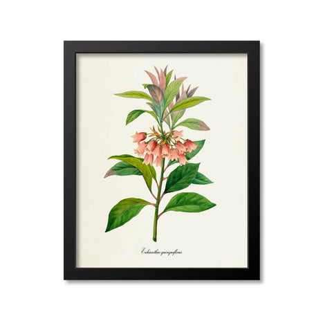 Chinese New Year Flower Art Print