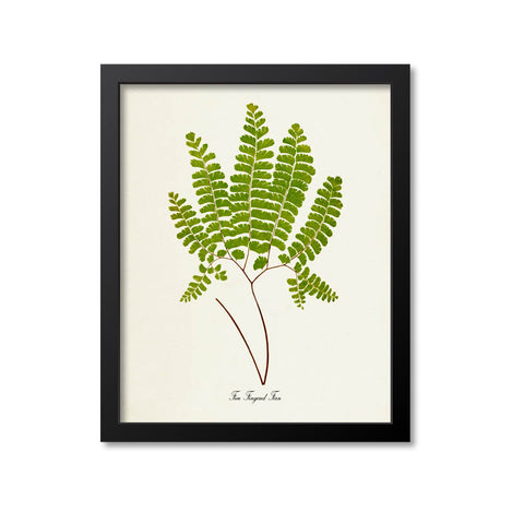 Five Fingered Fern Art Print