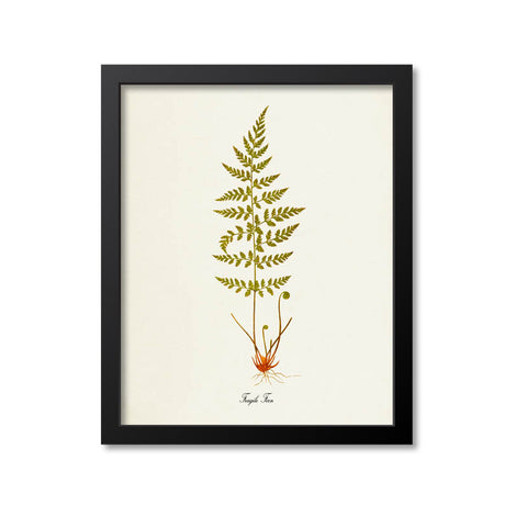 Fragile Fern Art Print