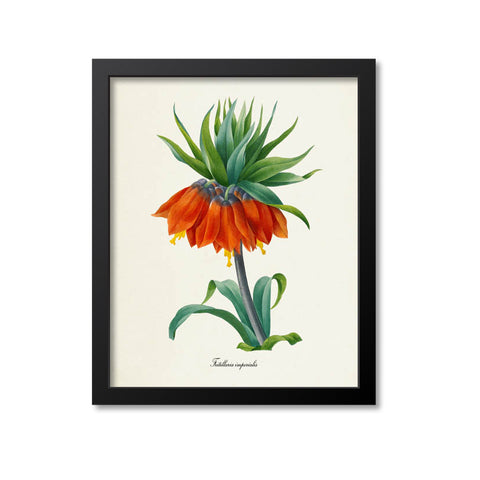 Crown imperial fritillary Flower Art Print
