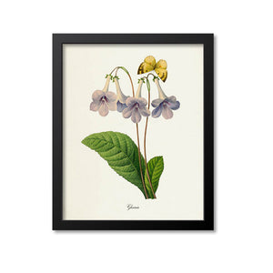Gloxinia Flower Art Print