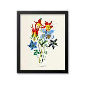 Granny's Bonnet Flower Art Print