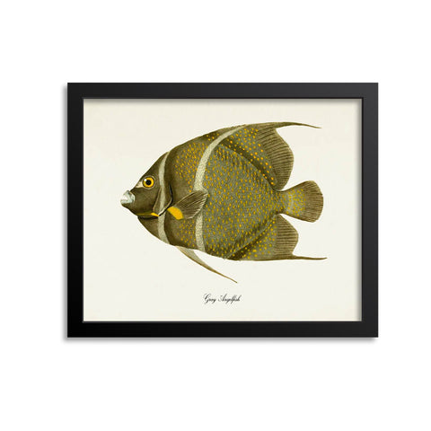 Gray Angelfish Art Print