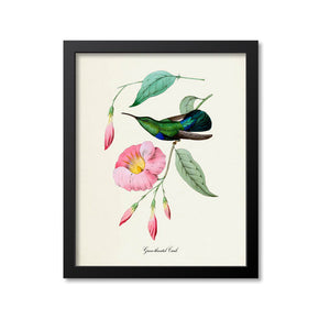 Green-throated Carib Hummingbird Print