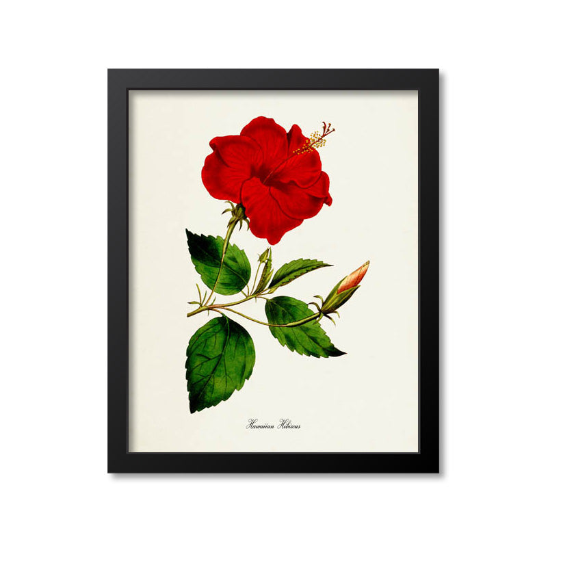 Hawaiian Hibiscus Flower Art Print