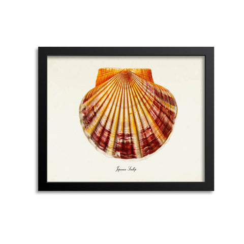 Japanese Scallop Art Print