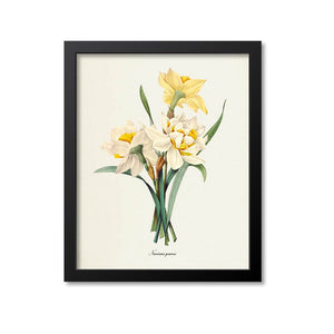 Double Daffodil Flower Art Print