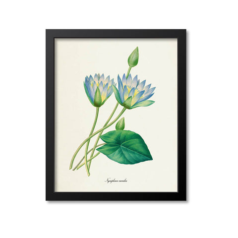 Blue Lotus Flower Art Print, Egyptian lotus