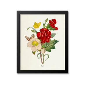 Carnation Flower Art Print, Butterfly
