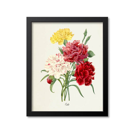 Carnation Flower Art Print