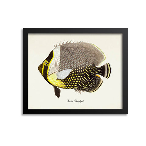 Pakistan Butterflyfish Art Print