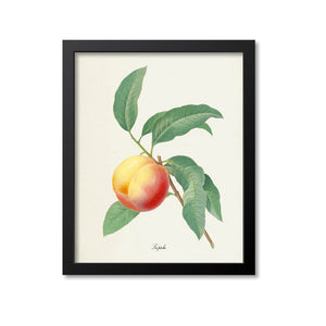 Peach Botanical Print