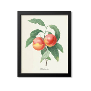 Peaches Botanical Print