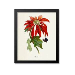 Poinsettia Flower Art Print