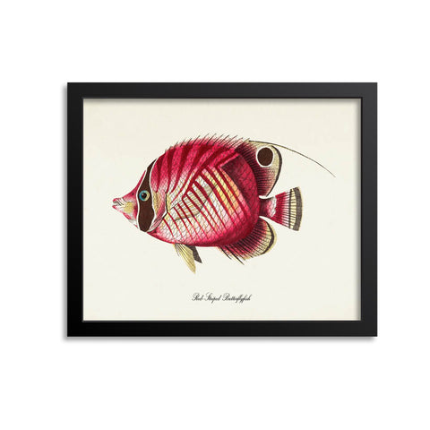 Red-Striped Butterflyfish Art Print