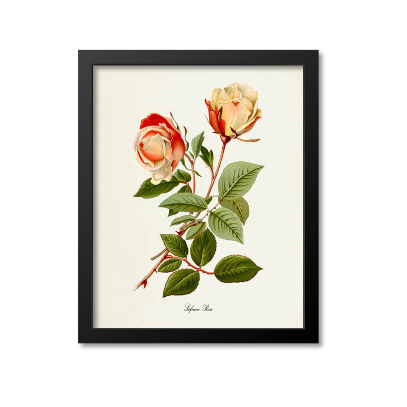 Safrano Rose Flower Art Print