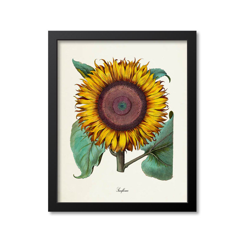 Sunflower Flower Art Print