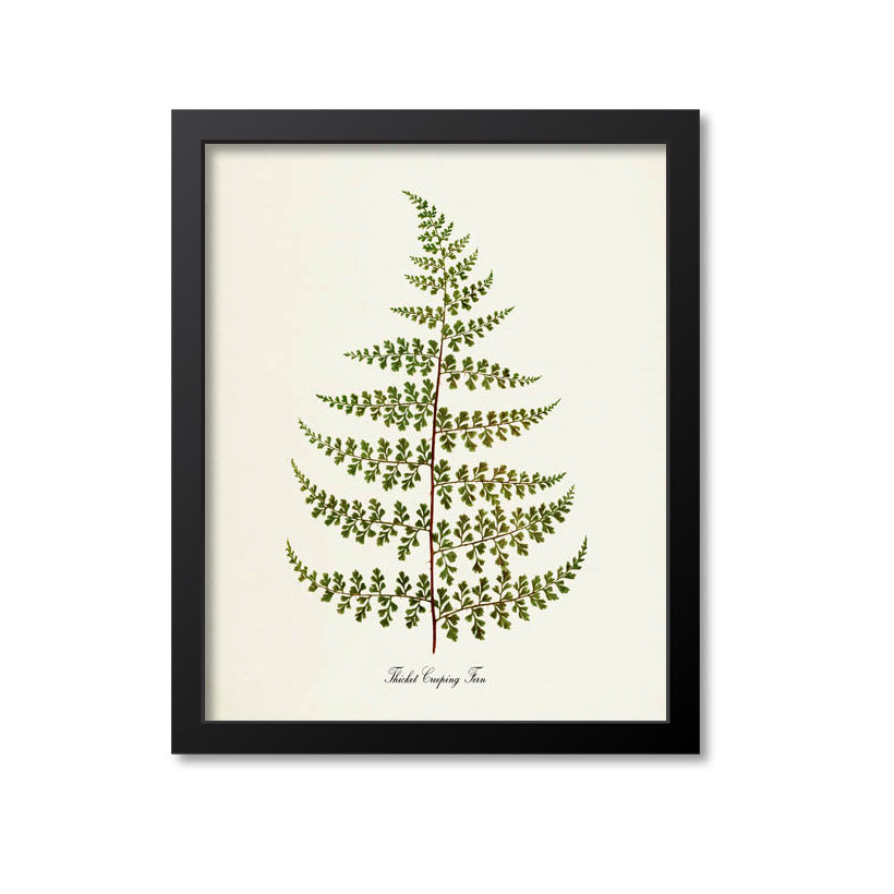 Thicket Creeping Fern Art Print