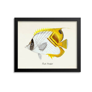 Threadfin Butterflyfish Art Print
