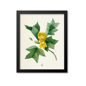 Tulip Flower Art Print, Yellow