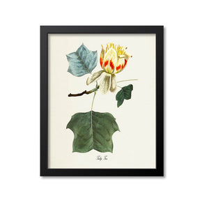 Tulip Tree Art Print