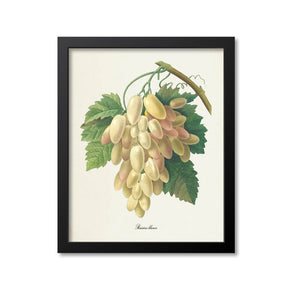 White Grapes Botanical Print