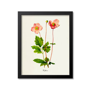 Windflowers Art Print