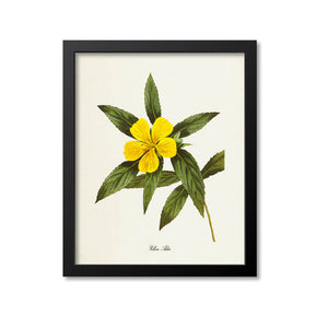 Yellow Alder Flower Art Print