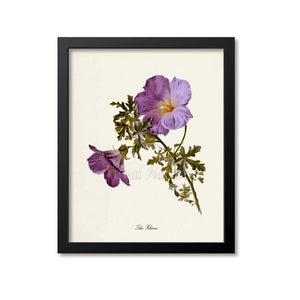 Lilac Hibiscus Flower Art Print