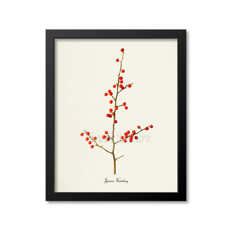 Japanese Winterberry Art Print