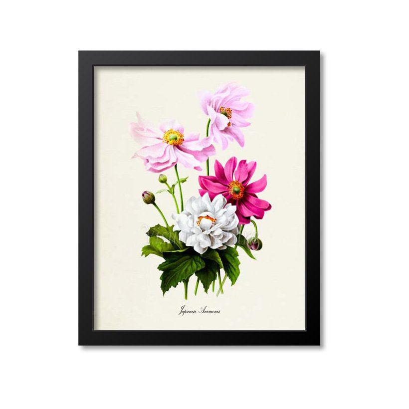 Japanese Anemones Flower Art Print