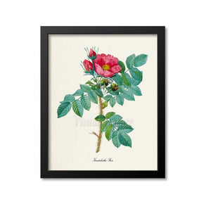 Kamtschatka Rose Flower Art Print