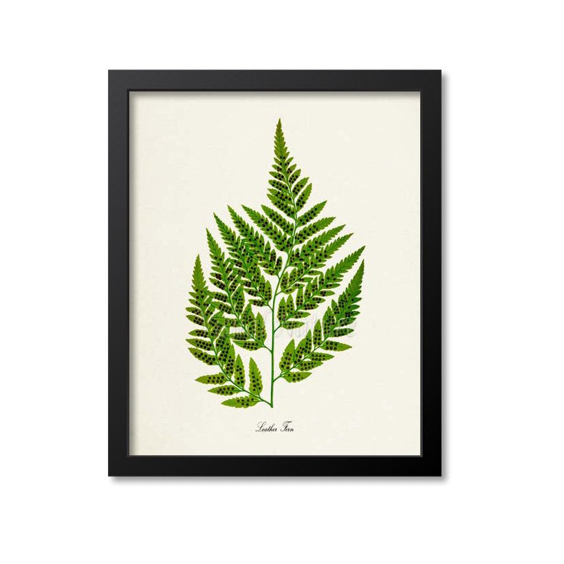 Leather Fern Art Print