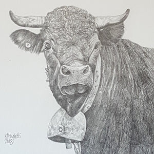 Drawing of a Swiss cow