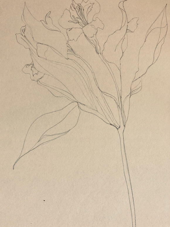 Botanical Drawing Warm-up Tasks