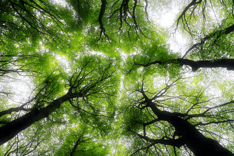 Forest Bathing: Finding Nourishment Amongst the Trees