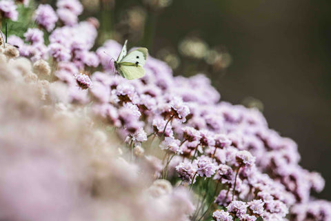 Our Top Ten Cornish Wildflowers
