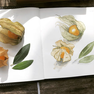 Botanical Journals. 4th March