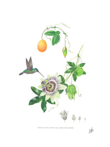 Botanical Tea Towels. Passionflower
