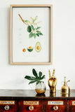 Botanical Art Prints A3