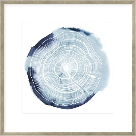 Tree Ring Overlay Iii