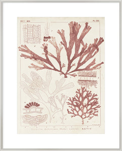 Antique Coral Seaweed Iv