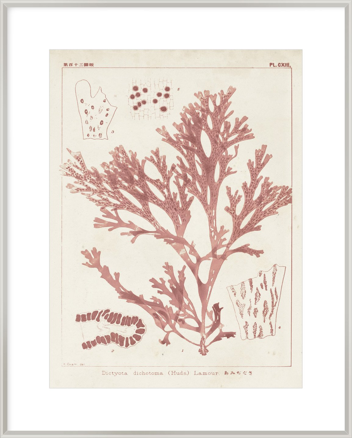 Antique Coral Seaweed I